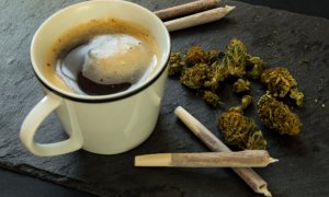 Ireland Opens Its First Cannabis Cafe