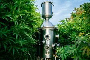 Ethanol Extraction for CBD: Safe and Efficient
