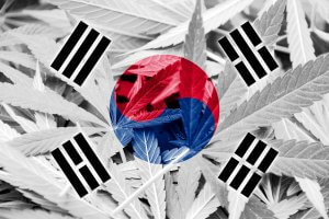 South Korea Becomes the First East Asian Country to Allow Medical Marijuana