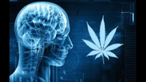 How CBD Affects Human Memory?