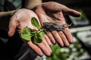 Mogelijk Grootste Landbouwdoorbraak in Tijden: 40 Procent Meer Opbrengst Uit Gewassen